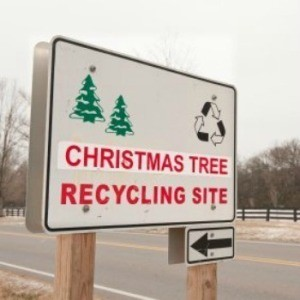 Christmas tree recycling center.