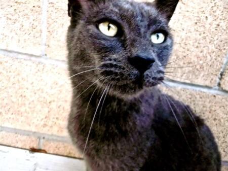 Closeup of Panther the Cat