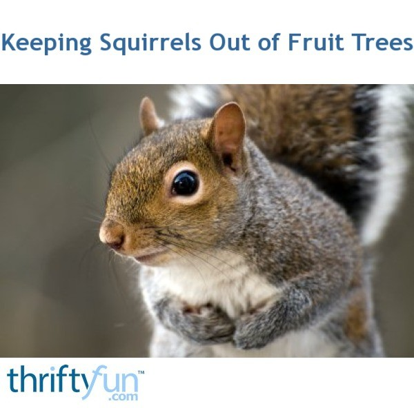 how to keep squirrels out of peach trees