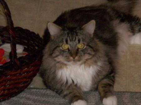 Tabby cat lying on floor by a basket.