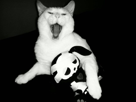 Avalanche the Cat Yawning With Arm Around Toy