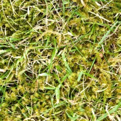 Getting Rid Of Moss In Your Lawn Thriftyfun