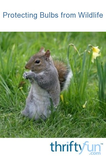 Protecting Bulbs From Wildlife Thriftyfun