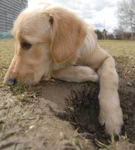 Dogs Digging In Flower Beds Thriftyfun