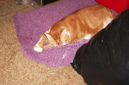 Cornelius the Cat on Purple Pet Bed