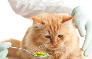 Giving a Cat a Pill, Vet Giving Spoonfull of Pills to Cat