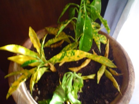 Green and yellow speckled plant.
