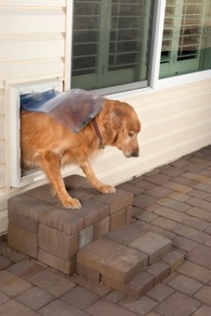 Dog Going out Pet Door