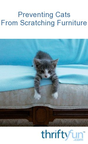 keep your cat off furniture