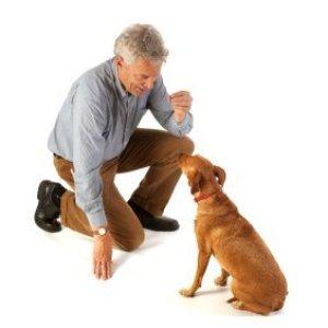 Man training a dog to sit.
