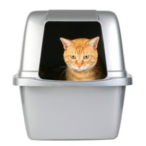 Litter Box Training a Cat, Tabby in litter box.