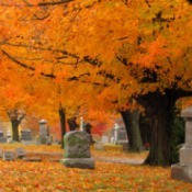 Cemetery with fall colored leaves in trees and on the ground