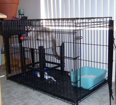 Large dog crate with blue litter box.