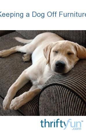 Keeping A Dog Off Furniture Thriftyfun