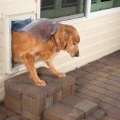 A dog using a dog door.
