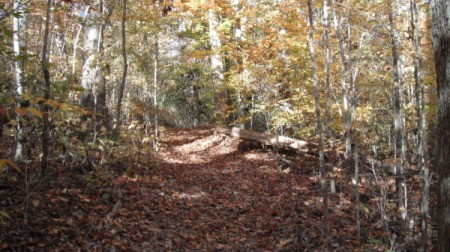 A wooded path in fall