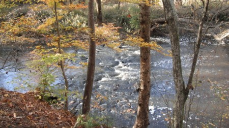 A river in the woods in fall.