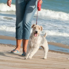 A dog and it's owner walking on the beach.