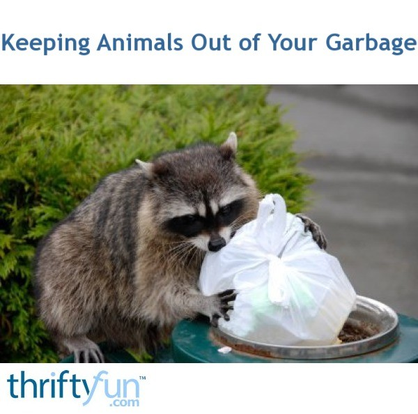 Keeping Animals Out of Your Garbage | ThriftyFun
