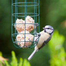 A bird eating suet out of a feeder.