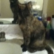 Shyanne the Cat Looking at Herself in the Mirror