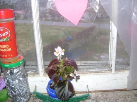 Plant in kitchen window.