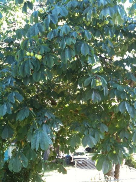 Distant photo of tree.