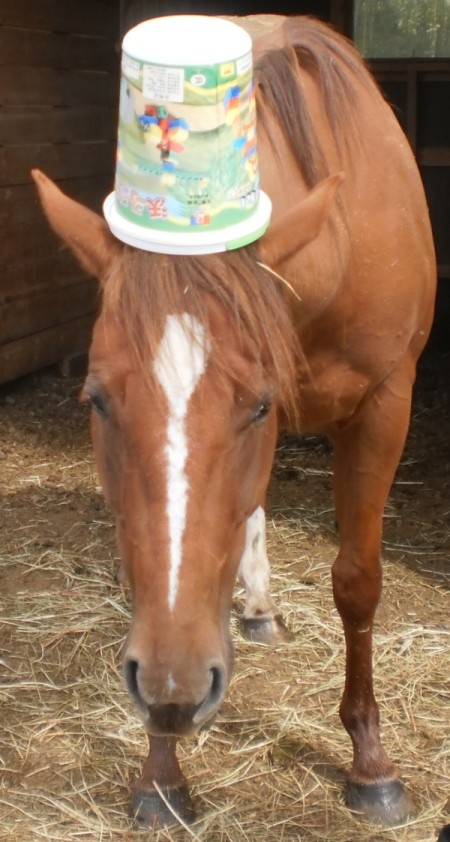 Rose the Horse Being a Clown with a Bucket on it's Head