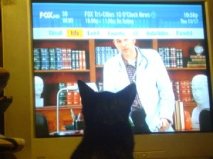 Cat Watching TV 2