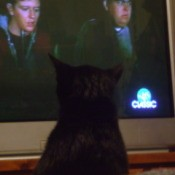 Cat Watching TV 3