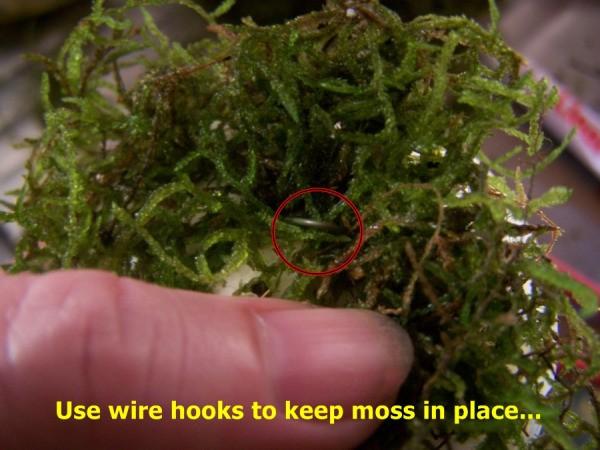 Hand touching craft moss