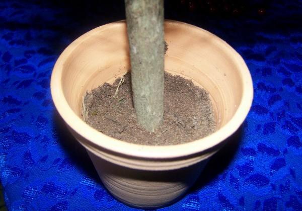 Stick in a pot half full of dirt