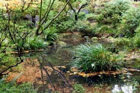Green Garden Pond at Portland Japanese Garden