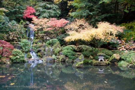 Autumn Waterfall at Portland Japanese Garden