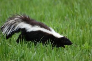 Removing Skunk Smell from Books