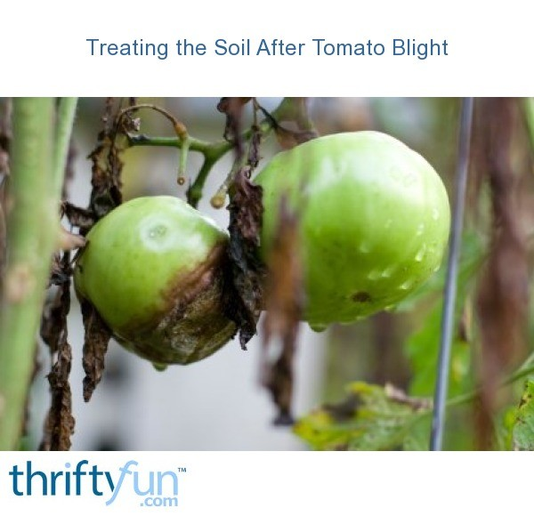 Soil For Tomatoes: Treating Soil After Tomato Blight