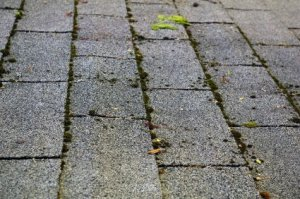 Removing Moss from Asphalt Roof Tiles