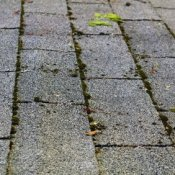 Removing Moss from Asphalt Roof Tiles