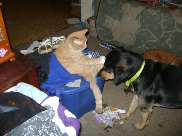 Bruno the Mixed Breed Dog With Cat Patting Him on the Head