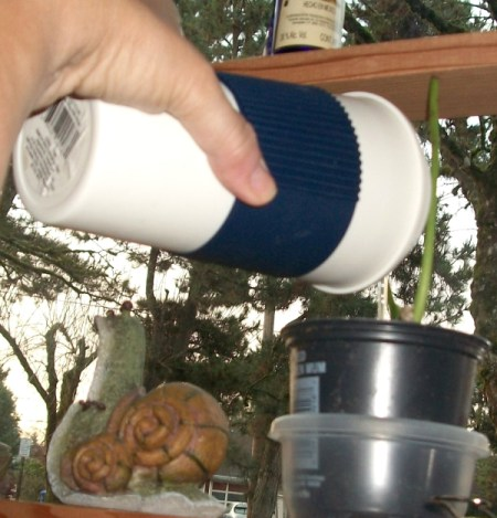A reusable To-Go coffee cup to water plants.