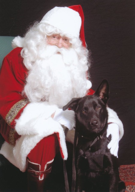Apollo the American Lattle with Santa Clause