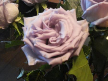 Closeup of A Beautiful Dozen Lilac Roses