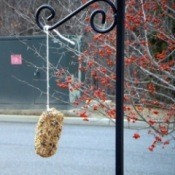 pine cone bird feeder hanging on cord
