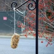 pine cone bird feeder hanging on cord