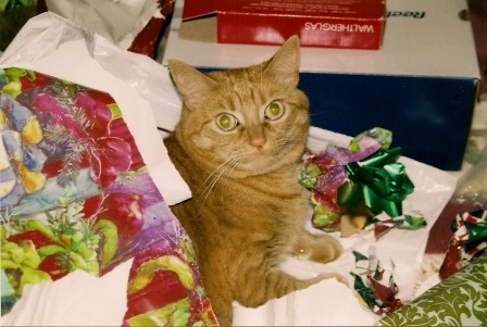 Ginger the Cat Laying with Christmas Wrapping