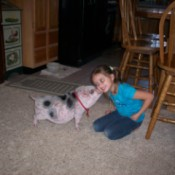 Baby Pig Digby Giving Raysa a Kiss