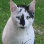 White cat with black splotches on head and face.