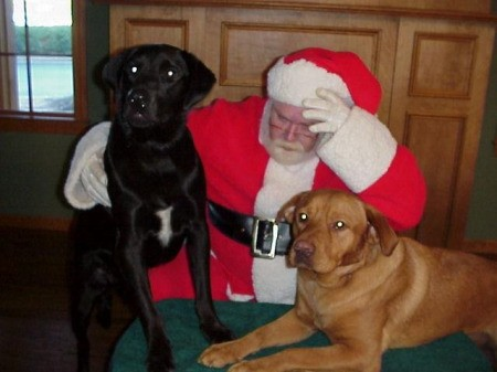 Two Large Dogs Meeting Santa