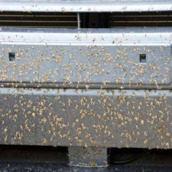 Cleaning Love Bugs From Cars Thriftyfun