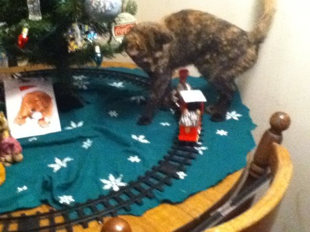 Shandee the Tortoiseshell Kitty UNder the Christmas Tree